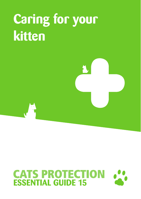 Caring for your kitten