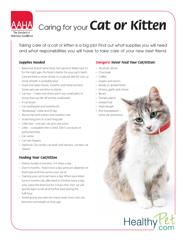 Caring for your Cat or Kitten