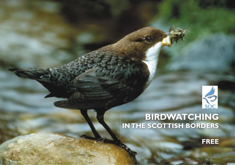 BIRDWATCHING IN THE SCOTTISH BORDERS