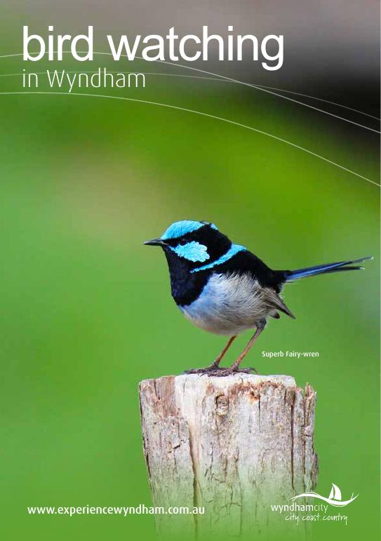 Bird watching in Wyndham