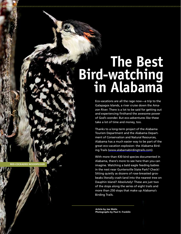 the best bird-watching in Alabama
